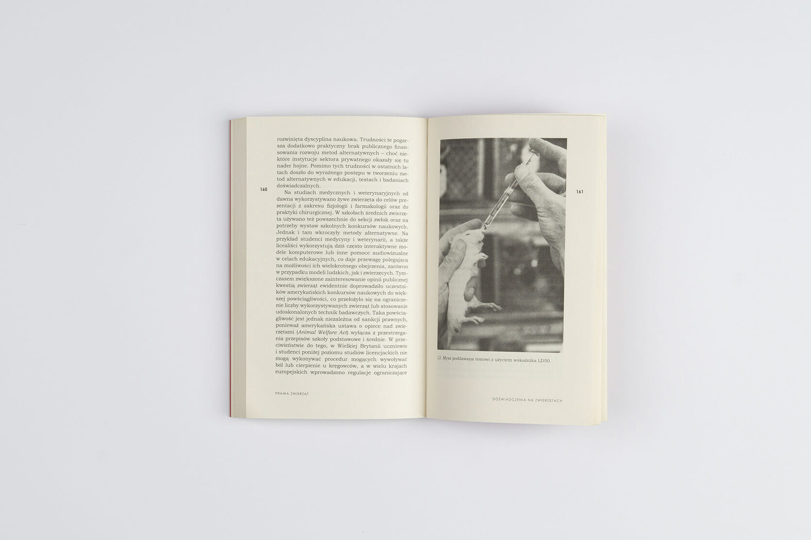 Animal rights - de grazia - book cover - typography